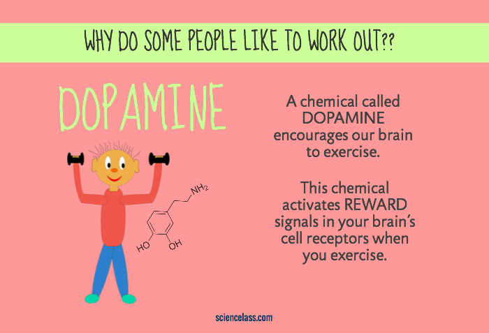 Why do some people like to exercise?
