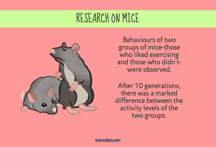 Research on mice